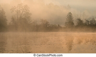 Silhouettes of trees on a misty foggy morning on the lake shore