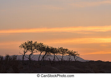 silhouettes of trees on hill