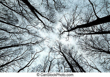 silhouettes of trees on the cloudy sky.