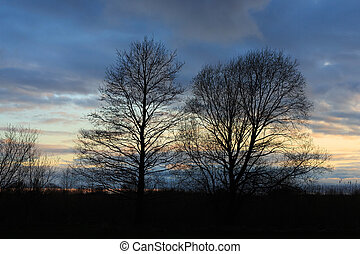 Silhouettes of trees with bare branches against a cloudy evening sky.