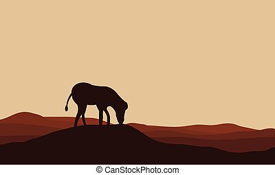 Silhouettes of zebra in hills