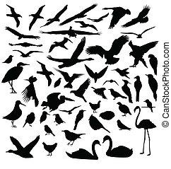 silhouettes, oiseau