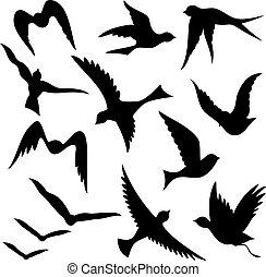 silhouettes, oiseau volant