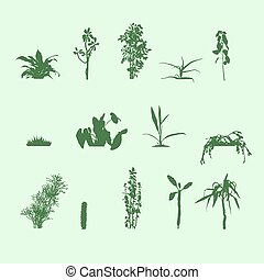 silhouettes plants