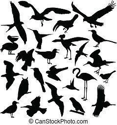 silhouettes, ptáci