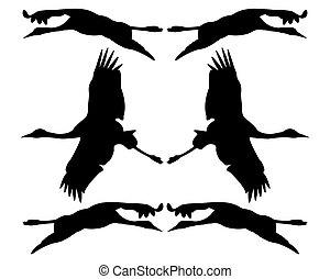 silhouettes., ptáci