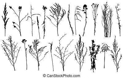 silhouettes., sauvage, usines, mauvaises herbes, vecteur, illustration., collection