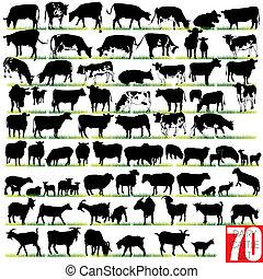 silhouettes, set, zuivelbedrijf vee