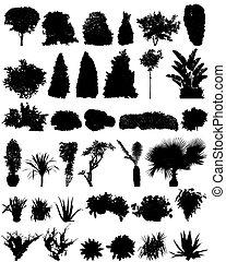 silhouettes, struiken, bomen