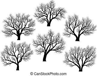 silhouettes:, træer, uden, leaves.