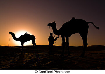 silhouettes, východ slunce, velbloud