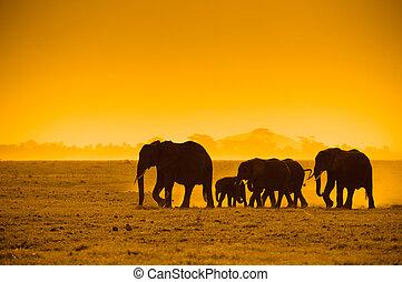 silhouettes, van, olifanten