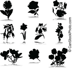 silhouettes, vector, black , bloem