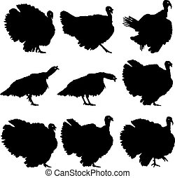 silhouettes, vector, turkeys., illustration.