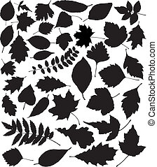 silhouettes, vektor, svart, bladen