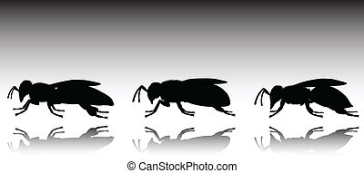 silhouettes, vektor, svart, tre, bi