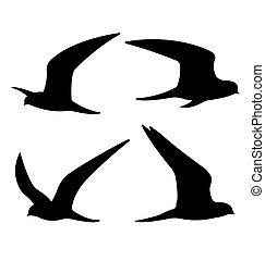 silhouettes., vliegende vogels