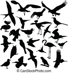 silhouettes, vogels