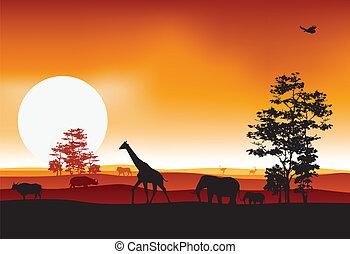 silhouettte of animal wildlife