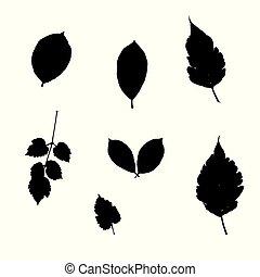 silhoutte, feuilles