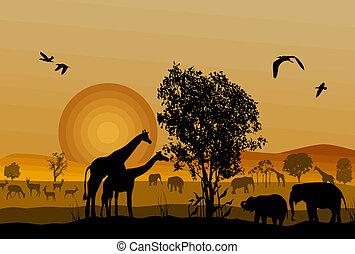 silhuet, i, safari, dyr, naturliv