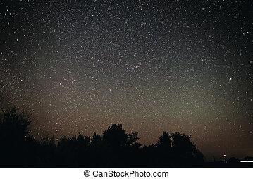silhuet, stjærneklar himmel, det, træer, lys, klar, baggrund, nat, upon