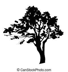 silhueta árvore