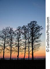 silhuetas, árvore