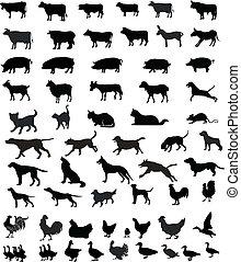 silhuetas, animais, animais estimação