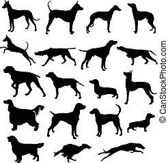 silhuetas, cachorros, caça
