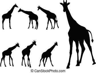 silhuetas, cobrança, girafas