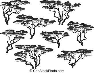 silhuetas, de, africano, acácia, árvores