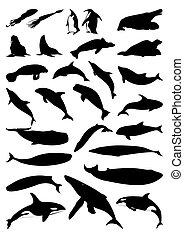 silhuetas, de, mar, mammals., um, vetorial, ilustração
