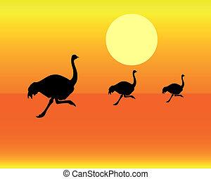 silhuetas, executando, avestruz