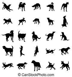 silhuetas, jogo, cão
