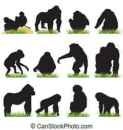 silhuetas, jogo, macacos