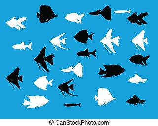 silhuetas, jogo, peixe, aquário