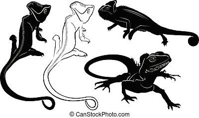 silhuetas, jogo, répteis, lagarto, camaleão
