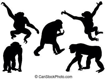 silhuetas, macaco, cobrança