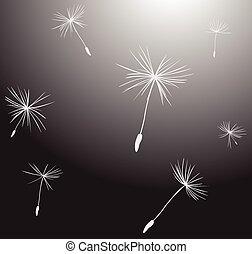silhuetas, sementes, vento, dandelion