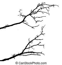 silhuett, av, den, filial, träd, vita, bakgrund