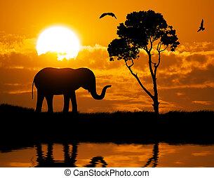 silhuett, av, elefant