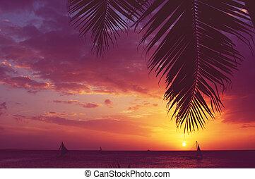 silhuett, palm trä, segelbåtar, solnedgång, urblekt,...