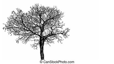 silhuett, skrämmande, träd, concept., fred, halloween, isolerat, död, bakgrund., dramatisk, object., bakgrund, död, konst, vit, dag