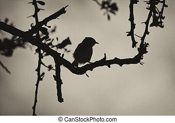 silhuett, tagg, sepia träd, smill, fågel