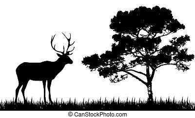 silhuett, träd, hjort