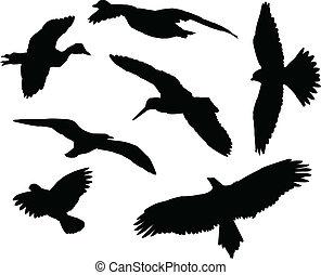 silhuetter, fugle