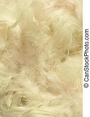 silkesfin, grädde, och, lätt, rosa, fjäder, bakgrund