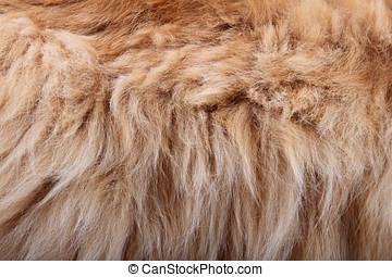 silkesfin, kreatur päls, struktur
