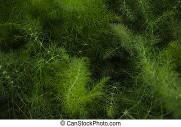 silkesfin, växt